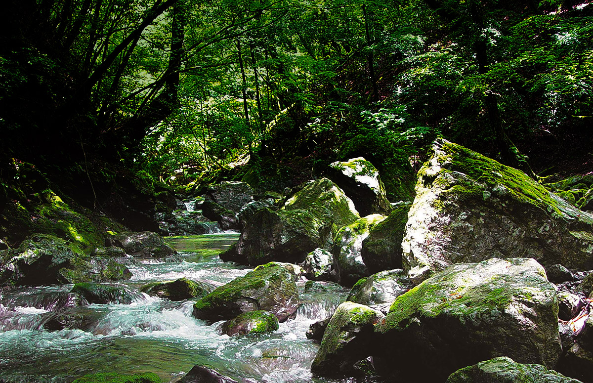 Headstream of Yoshino River: A forest of water resources
